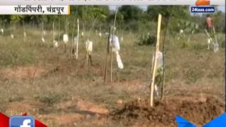 Chandrapur New Idea To Water Farms In Drouht Hit Area