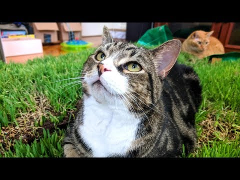I Built The World's LARGEST Cat Grass Bed And Put It In My LIVING ROOM!