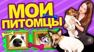 ♥ МОИ ПИТОМЦЫ ♥ Собачки, Пони, Хомячки и Я :D thumbnail