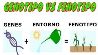 Genotipo Vs Fenotipo