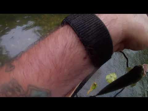 Trout Fishing Missouri