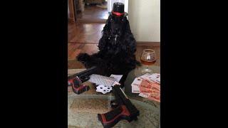 Карты,деньги,два ствола. Черная Дженни.(Собака играет в карты. Мафиози., 2015-07-16T08:22:10.000Z)