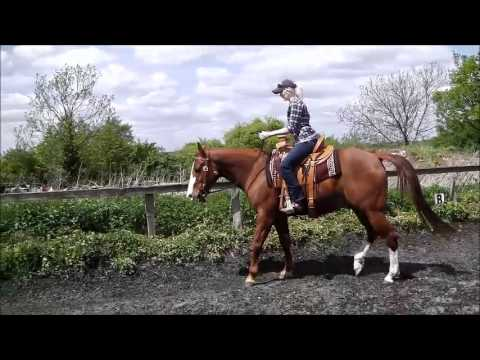 Riding Lesson American Quarter Horse Jake UK