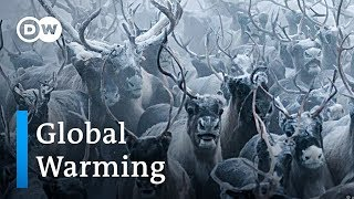 Global Warming threatens reindeers in Norway | DW Feature