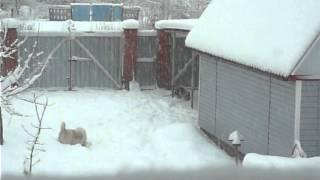 Мои животные зимой