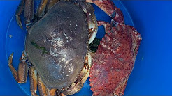 Newport Oregon crabbing