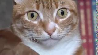 Cute and Funny Cat - Funny animals' life video compilations 2019