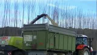 Energieholz und Energiewald als Kurzumtriebsplantage mit Kooperation Energie Steiermark Teil 2