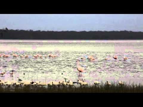 Национальный парк Накура Лейк в Кении
