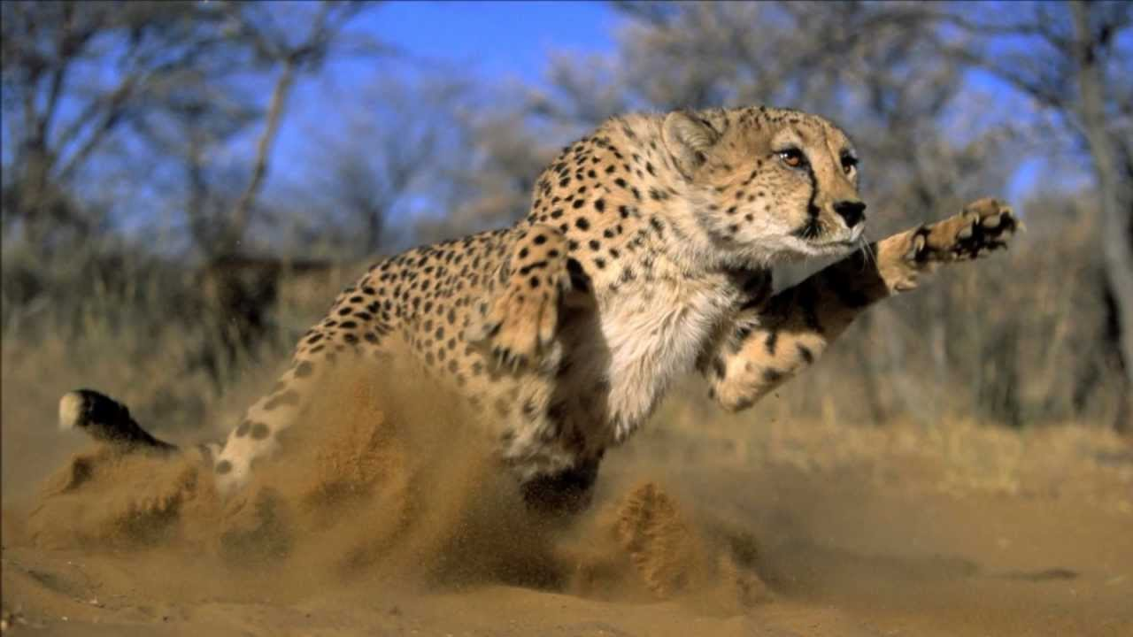 African Wildlife 2011Wmv Hd - Youtube-2837