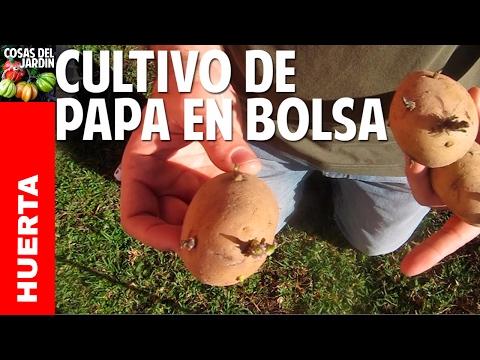 Cómo plantar papa en bolsa - Guia de cultivo y consejos - 1