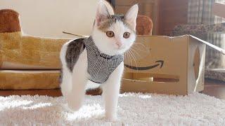 ハーネスの練習をする子ねこ2。 -Kitten Miri practices the harness .-