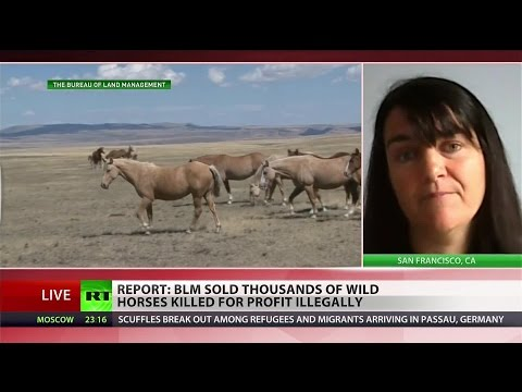 Bureau of Land Management illegally sold horses for slaughter – investigation