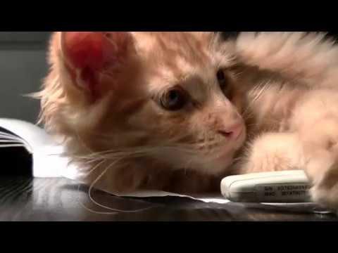 Katzen, Video Compilation über Haustiere