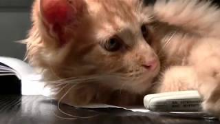 Cats, video compilation about pets