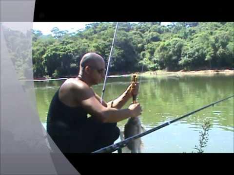 Pesca de tilápias com varas robaleiras