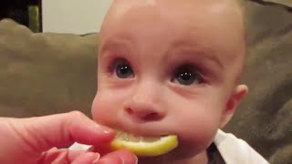 Cute Babies Eating Lemons for The First Time  - Cute Baby Video