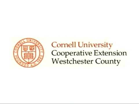Eat smart new york spanish version cornell cooperative extension spanish version cornell cooperative extension of westchester county colourmoves
