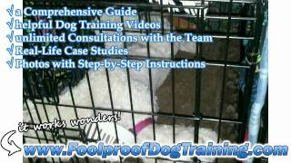 House Training A Dog Without A Crate - BEST Dog Training