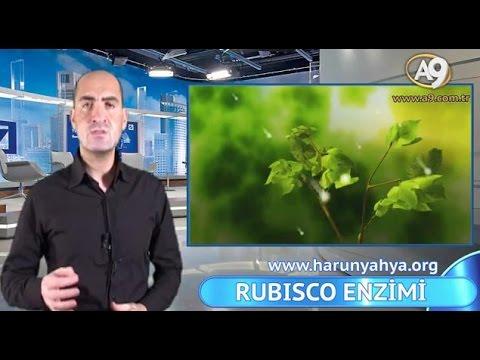 RUBİSCO ENZİMİ