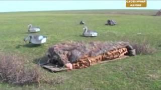 Охота на гуся. Теория, практика. Секреты охотников