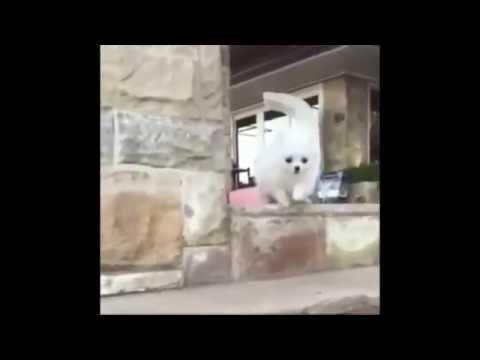 Dog Fail Slow motion HD