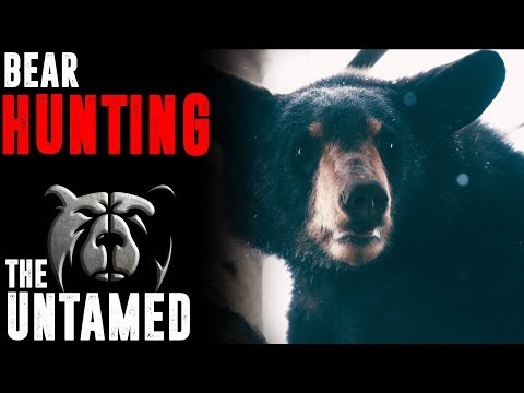 BEAR HUNTING WITH HOUNDS IN WEST VIRGINIA