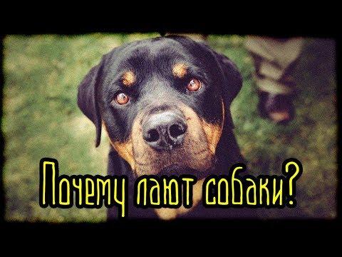 Почему лают собаки? (Страшная История)