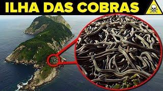 Baixar Conheça a PERIGOSA Ilha das COBRAS