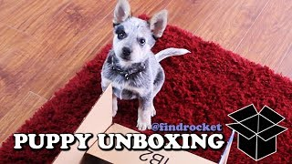First Puppy Unboxing