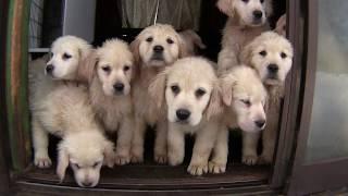 八ヶ岳 犬の牧場の犬たち