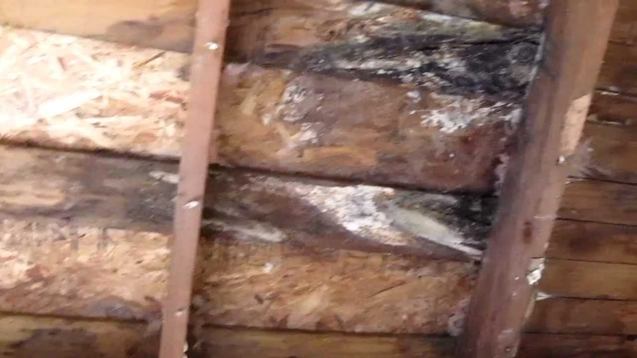 Roof Leak Dry Rot Repair General Contractor San Francisco
