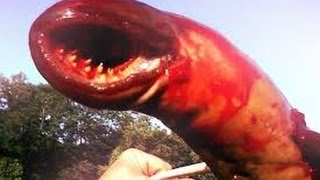 Giant Leech Monster Devours Everything! (now with more Evil Dead)