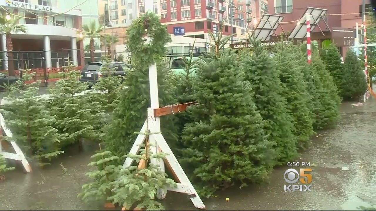 Fresh Green Christmas Trees Carry A Steep Price Tag At Bay Area Lots