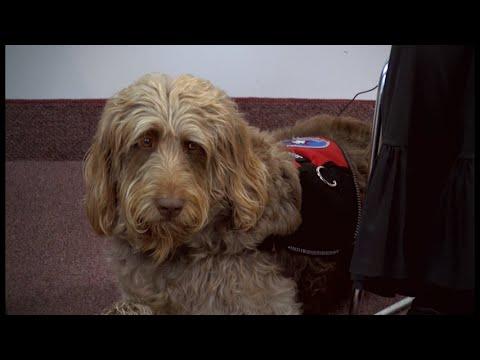 Gander Service Dog
