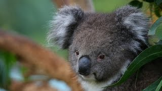 National Geographic Documentary - The Strangest Animals in Australia -   Wildlife Animal