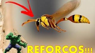reforo de abelha jatai
