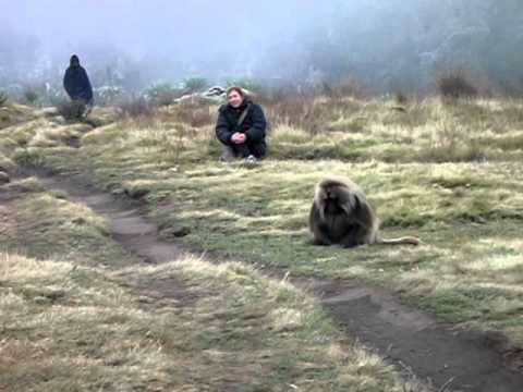 Baboons in the Simien Mountains, Ethiopia with KE Adventure Travel