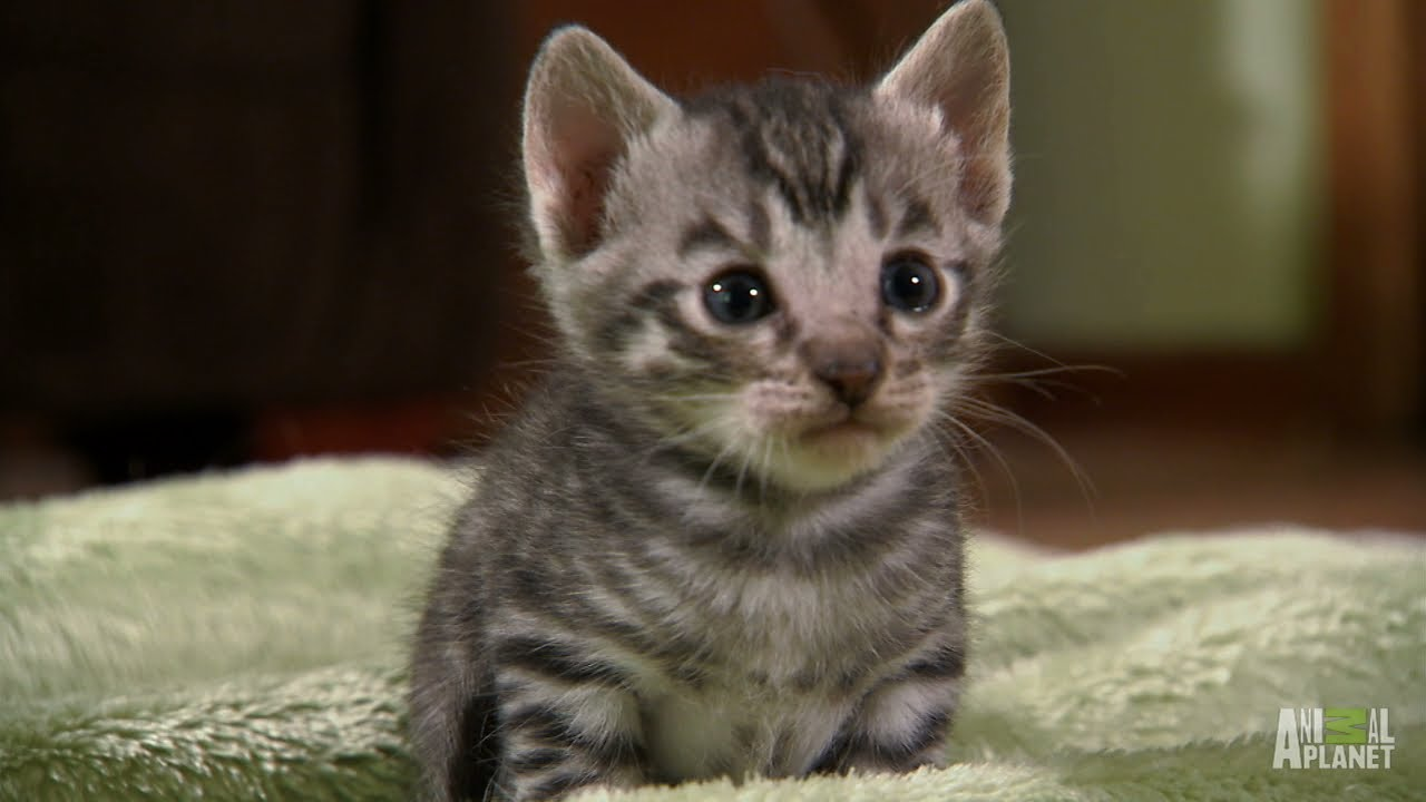 Top Ten Cute too Cute Kittens