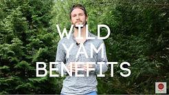 Wild Yam Benefits: PMS, Cramps, Menopause, Fertility