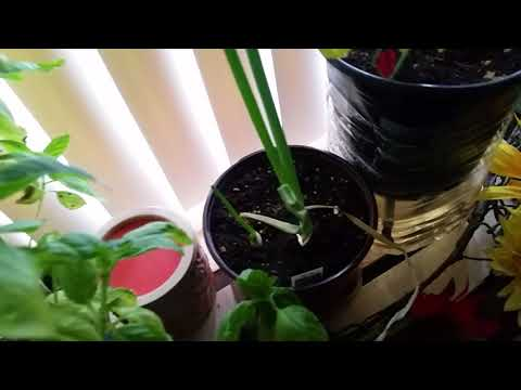 Growing your own food   Container garden Hurricane Irma