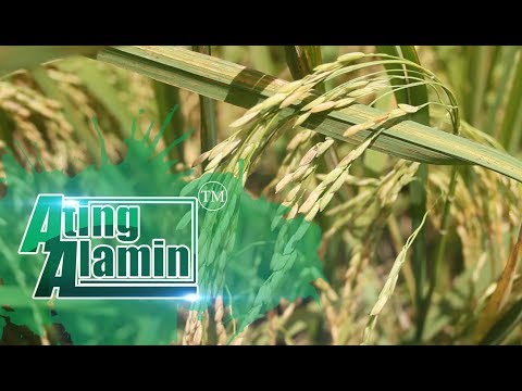 Ating Alamin October 15 2017