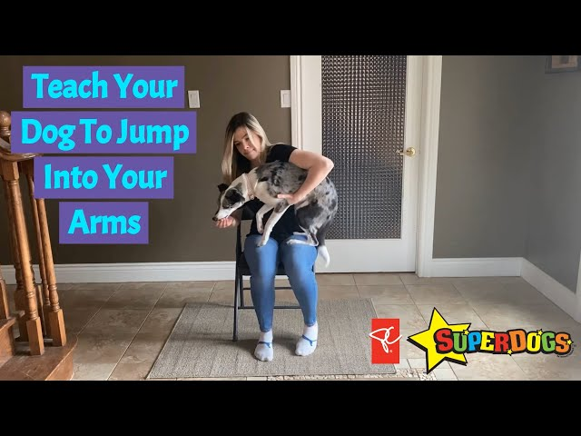 SuperDogs | Teach Your Dog To Jump Into Your Arms | Dog Training