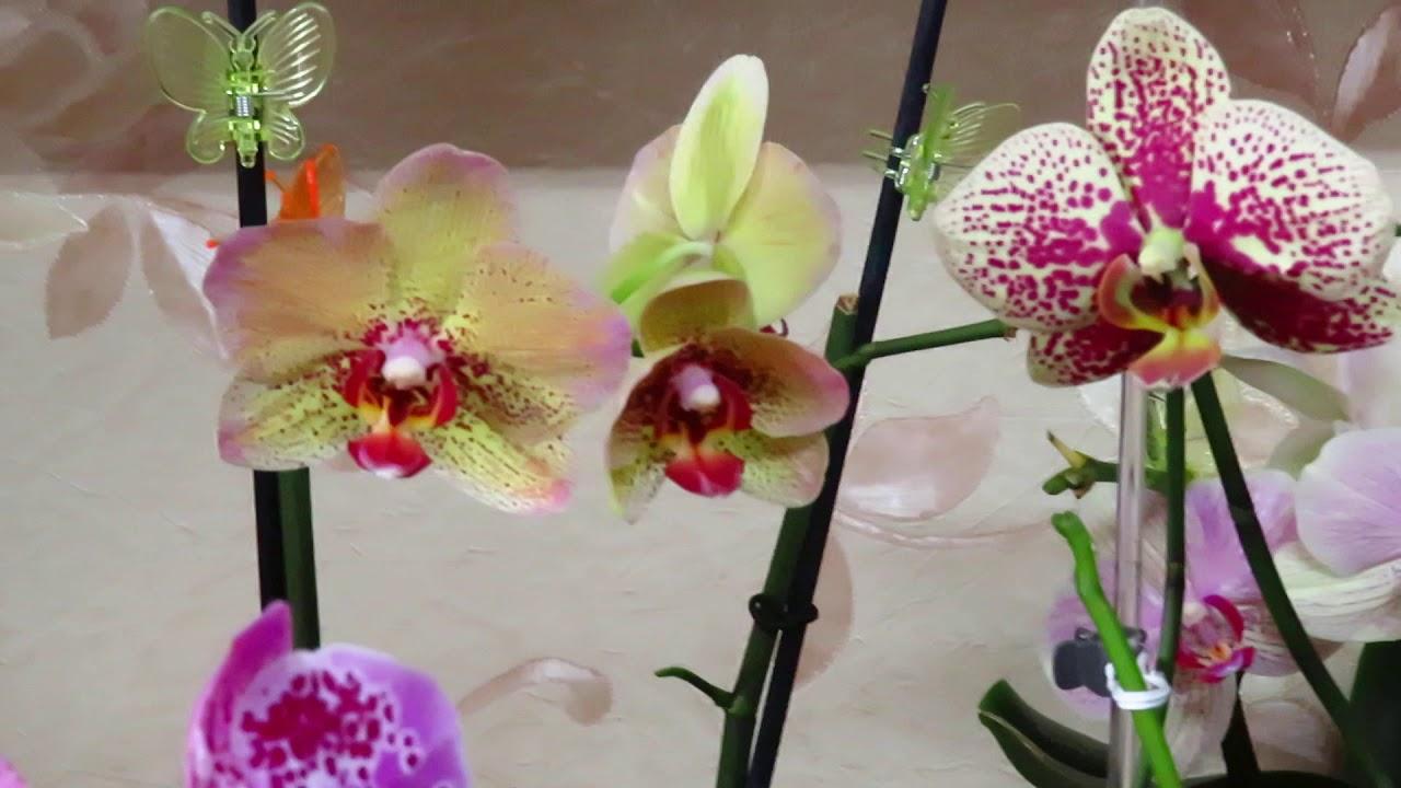 Новые орхидеи и немного разного.