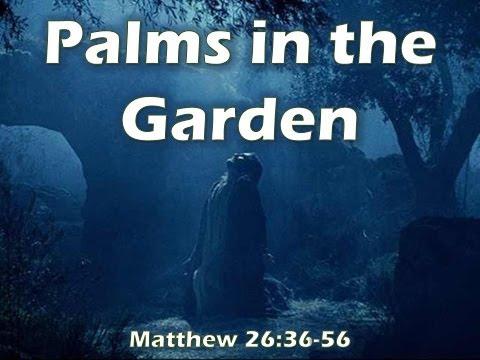 Palms in the Garden