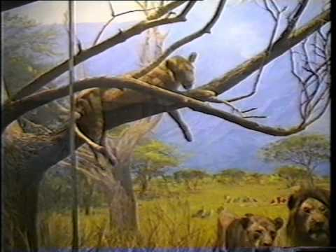 Saint Petersburg Zoological Museum