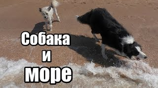 Крым. Генеральские пляжи. Собака на море. Собака ловит волны.