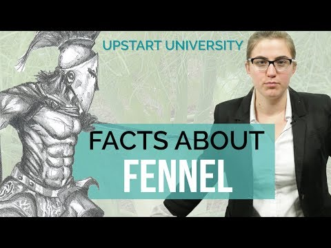 Facts You Didn't Know About Fennel