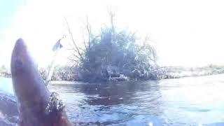 Подводная рыбалка на озере 2020 Судак пойман
