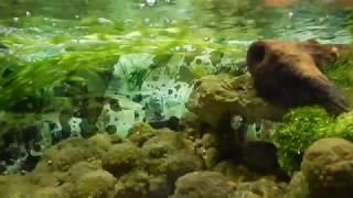 Краб в аквариуме. Полная версия.